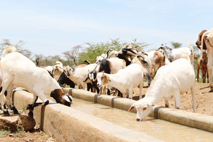 Multan Farms | Welcome To Multan Farms