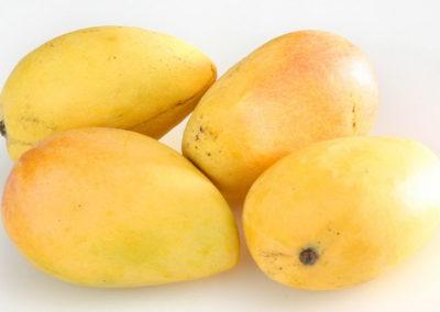 mango-fruit-hd-wallpaper-0006