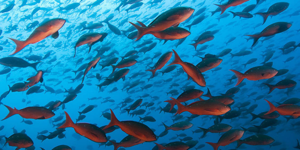 Requirements for Starting Fish Farm in Pakistan